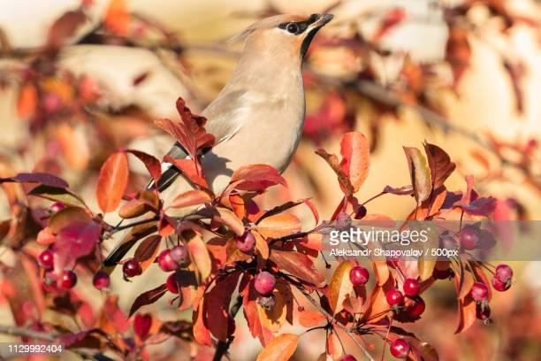 bird perching on branch - shapovalov stockfoto's en -beelden