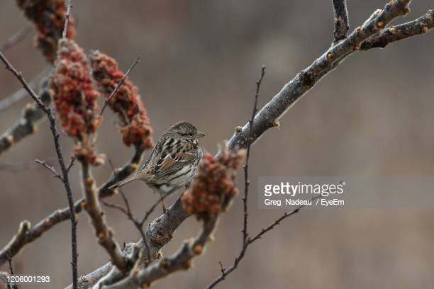 bird perching on branch - greg nadeau stock pictures, royalty-free photos & images