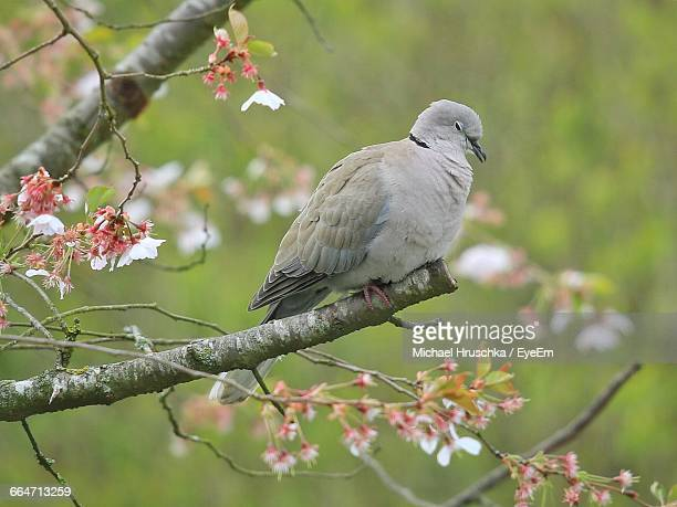 bird perching on branch - michael hruschka stock pictures, royalty-free photos & images