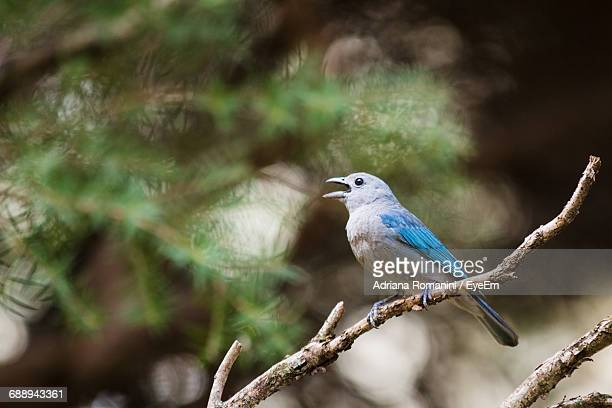 bird perching on branch - snavel stockfoto's en -beelden