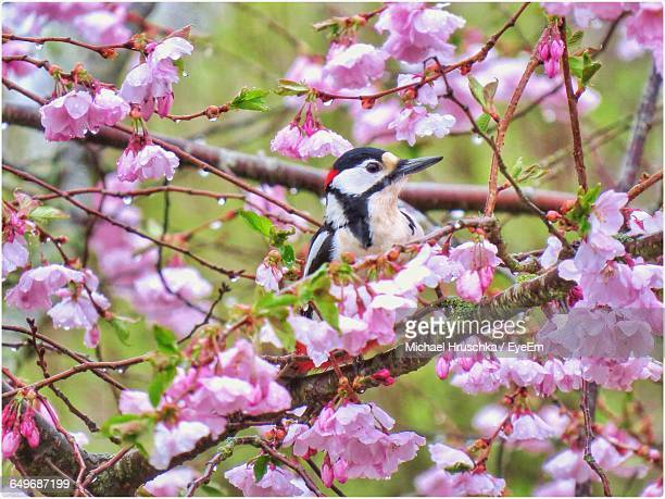 bird perching on flowering tree - michael hruschka stock pictures, royalty-free photos & images