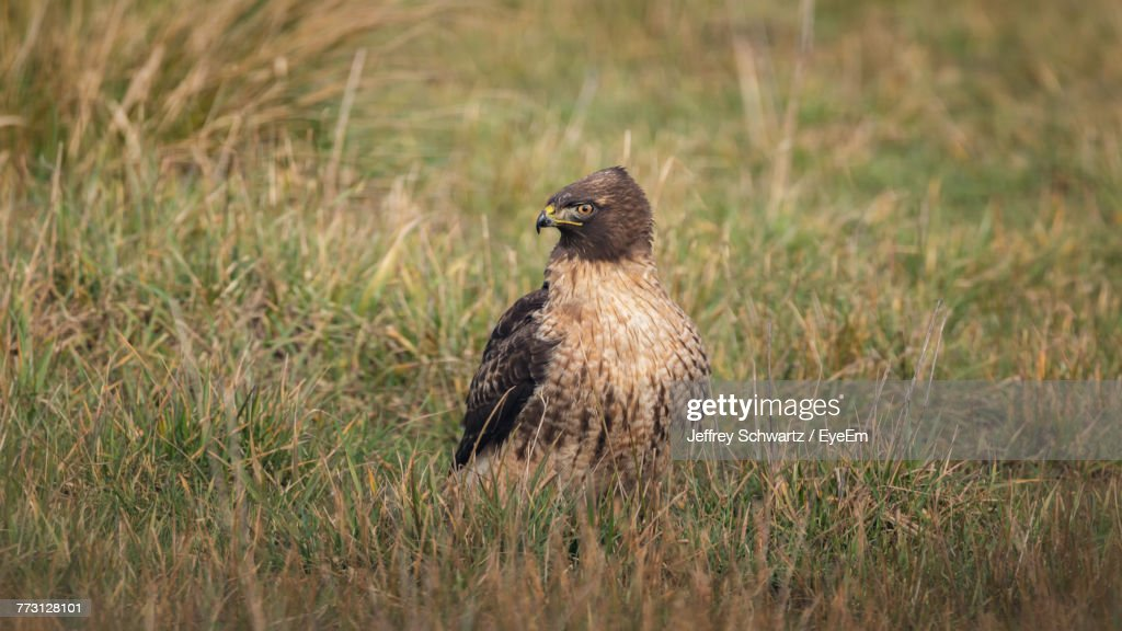 Bird Perching On Grass : Photo