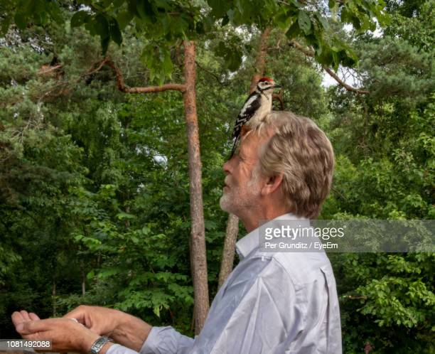 bird perching on man head against trees - per grunditz stock pictures, royalty-free photos & images