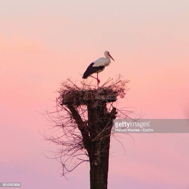 bird perching on nest - birds nest stock photos and pictures