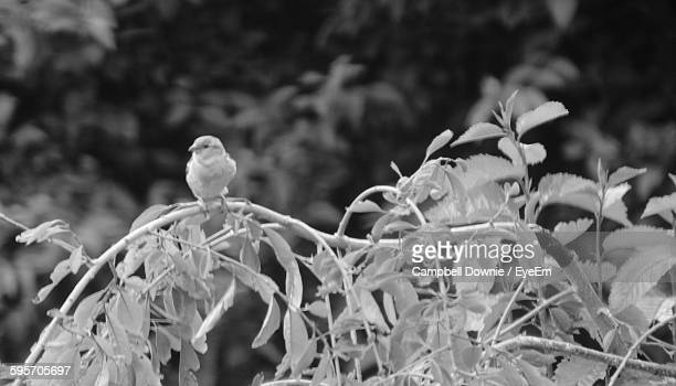bird perching on plant in forest - campbell downie stock pictures, royalty-free photos & images