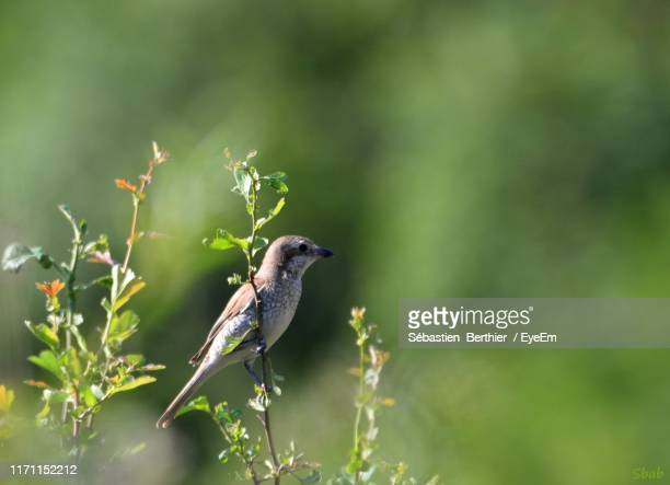 bird perching on plant - troyes champagne ardenne photos et images de collection