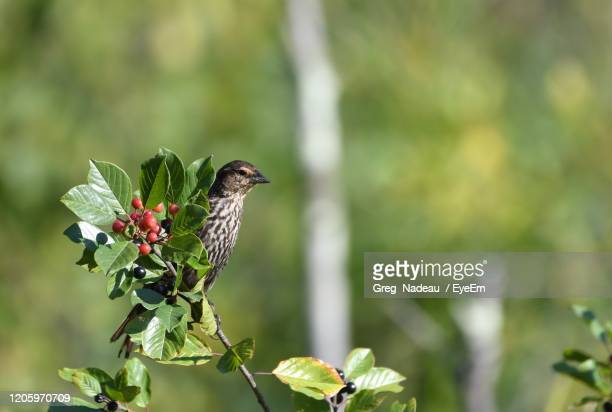bird perching on plant - greg nadeau stock pictures, royalty-free photos & images