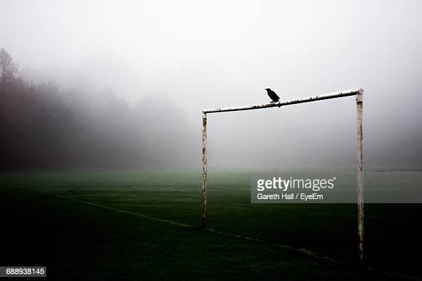 bird perching on pole of soccer field - perching stock photos and pictures