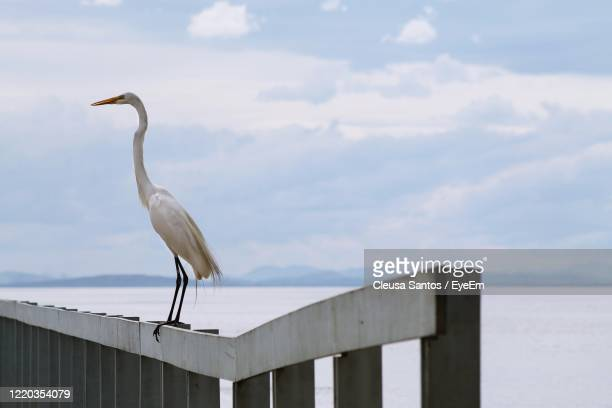 bird perching on railing against sky - píer stock pictures, royalty-free photos & images