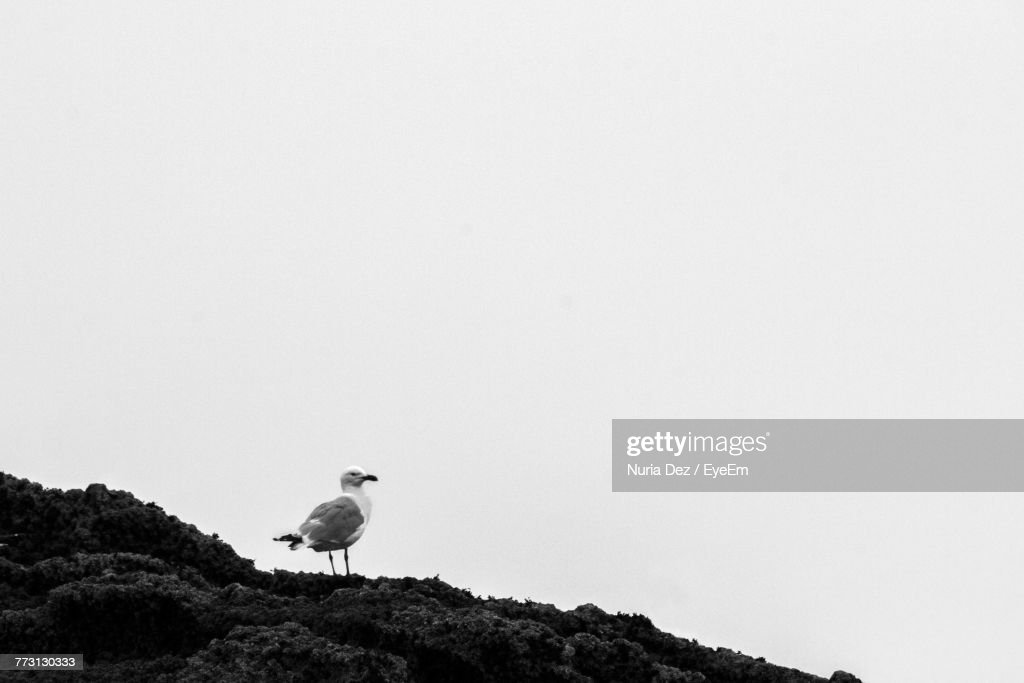Bird Perching On Rock Against Clear Sky : Photo