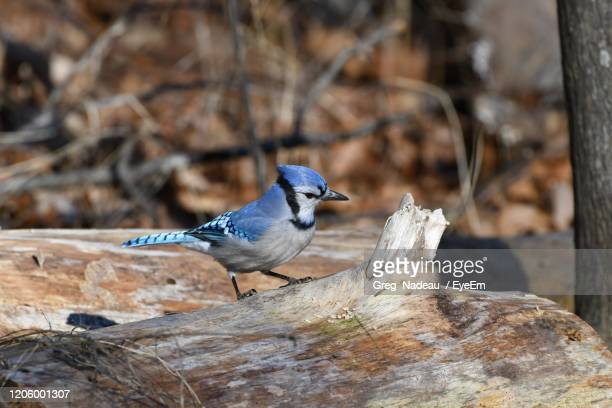 bird perching on rock - greg nadeau stock pictures, royalty-free photos & images