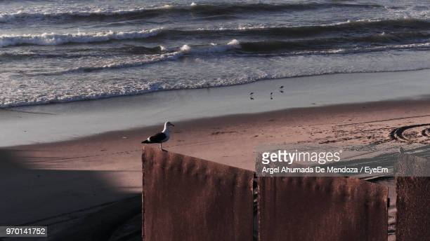 Bird Perching On Rusty Metal At Beach