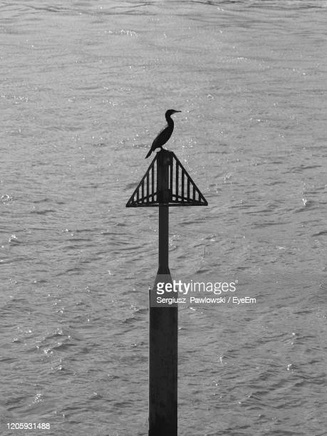 bird perching on sea shore - portsmouth england stock pictures, royalty-free photos & images