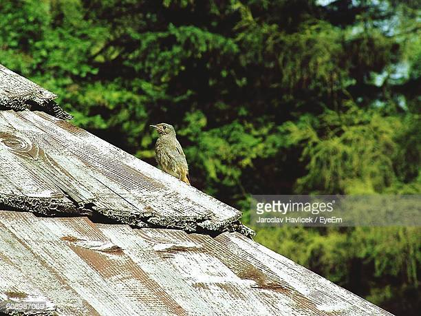 Bird Perching On Thatched Roof Against Trees