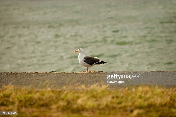 Bird perching on the water's edge
