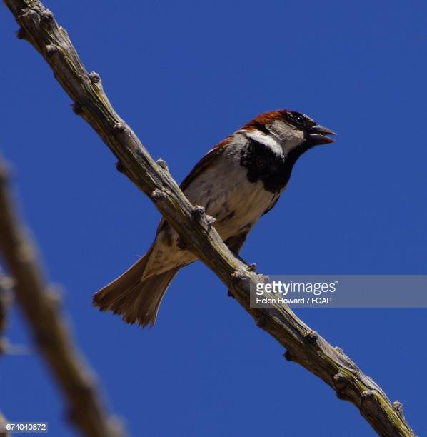 bird perching on tree branch - howard,_wisconsin stock pictures, royalty-free photos & images