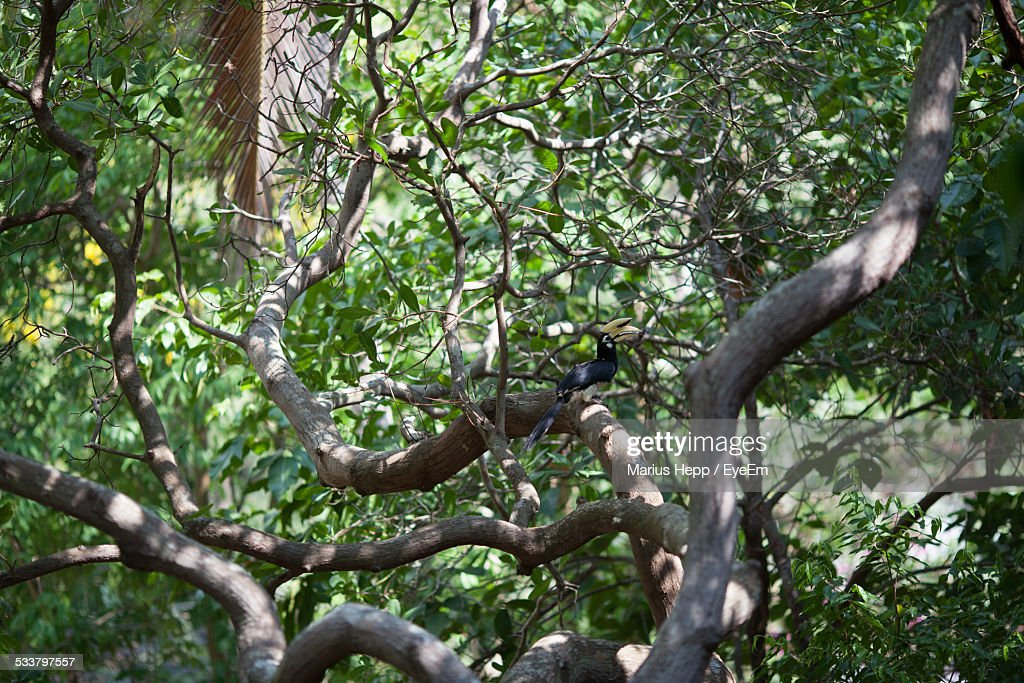 Bird Perching On Tree In Forest : Foto stock