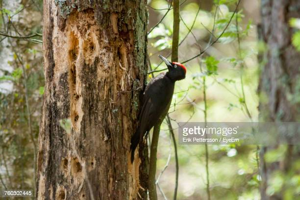 Bird Perching On Tree Trunk In Forest