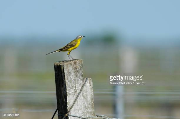 bird perching on wooden post by lake - marek stefunko stock photos and pictures