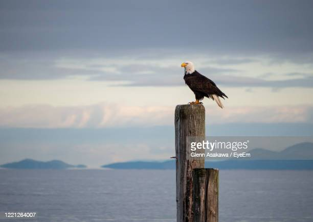 bird perching on wooden post in sea against sky - 止まる ストックフォトと画像