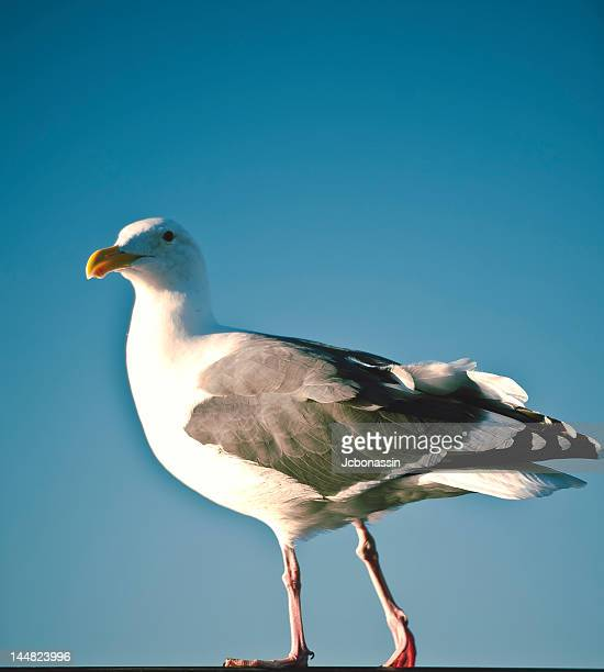 bird perching - jcbonassin stock pictures, royalty-free photos & images