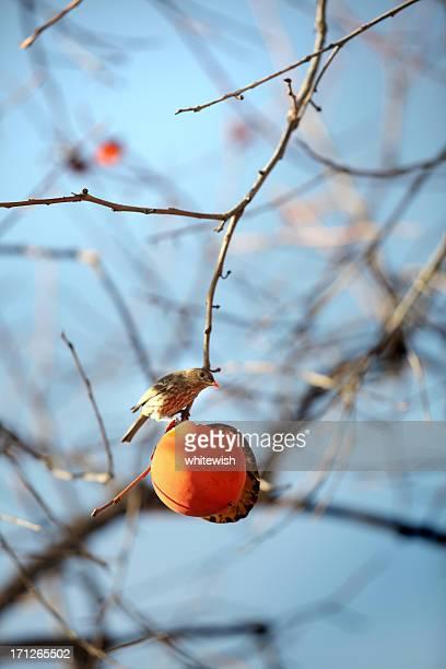 Bird & Genehmigung