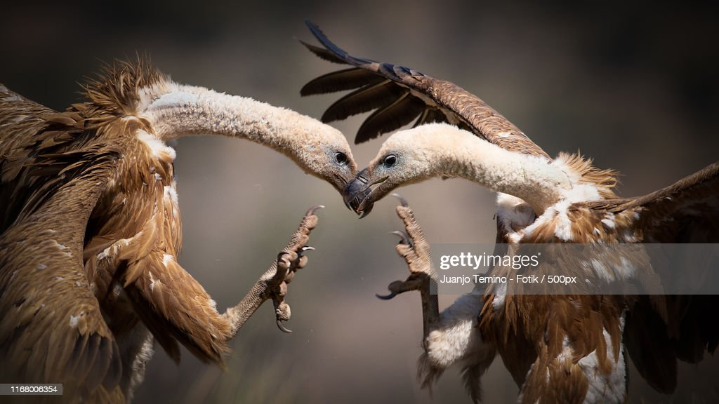 Bird Photo : Foto de stock