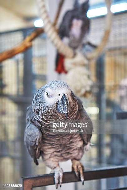 bird - niedlich ストックフォトと画像
