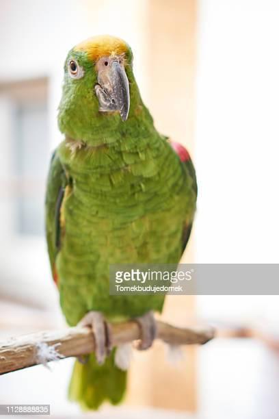 bird - niedlich stockfoto's en -beelden