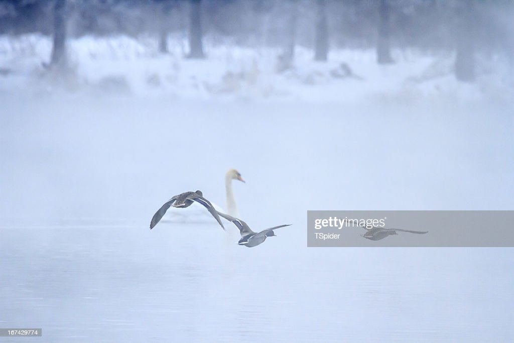 Pássaro : Foto de stock