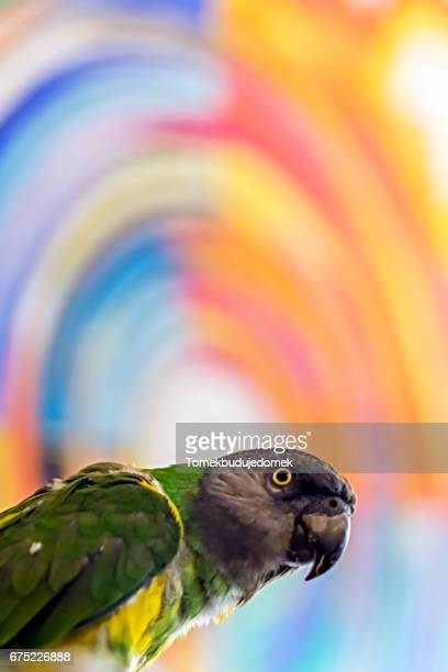bird - variable schärfentiefe stock pictures, royalty-free photos & images