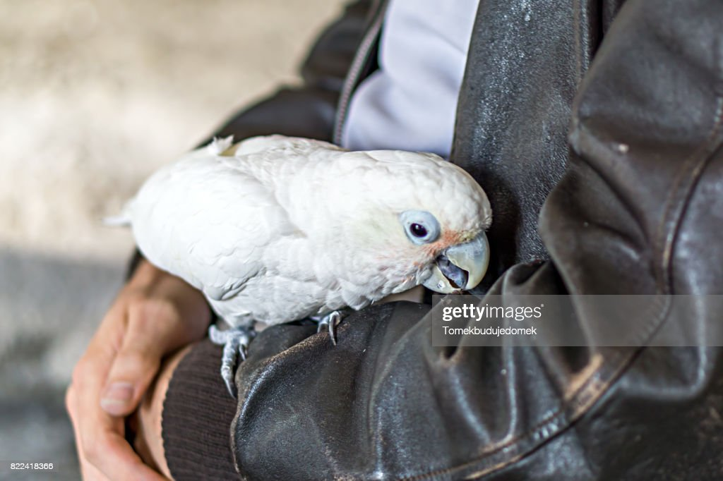 Bird : Stock Photo