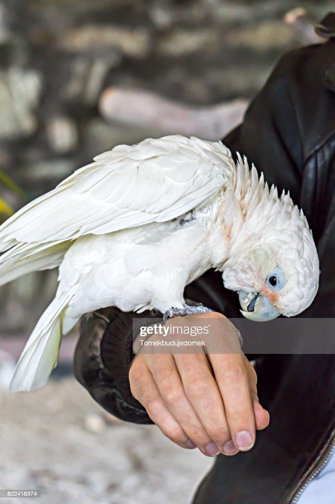 Bird : Stock Photo