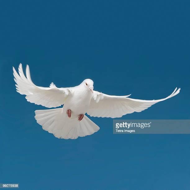 bird - 小さめのハト ストックフォトと画像