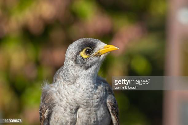 bird profile - lianne loach stock pictures, royalty-free photos & images
