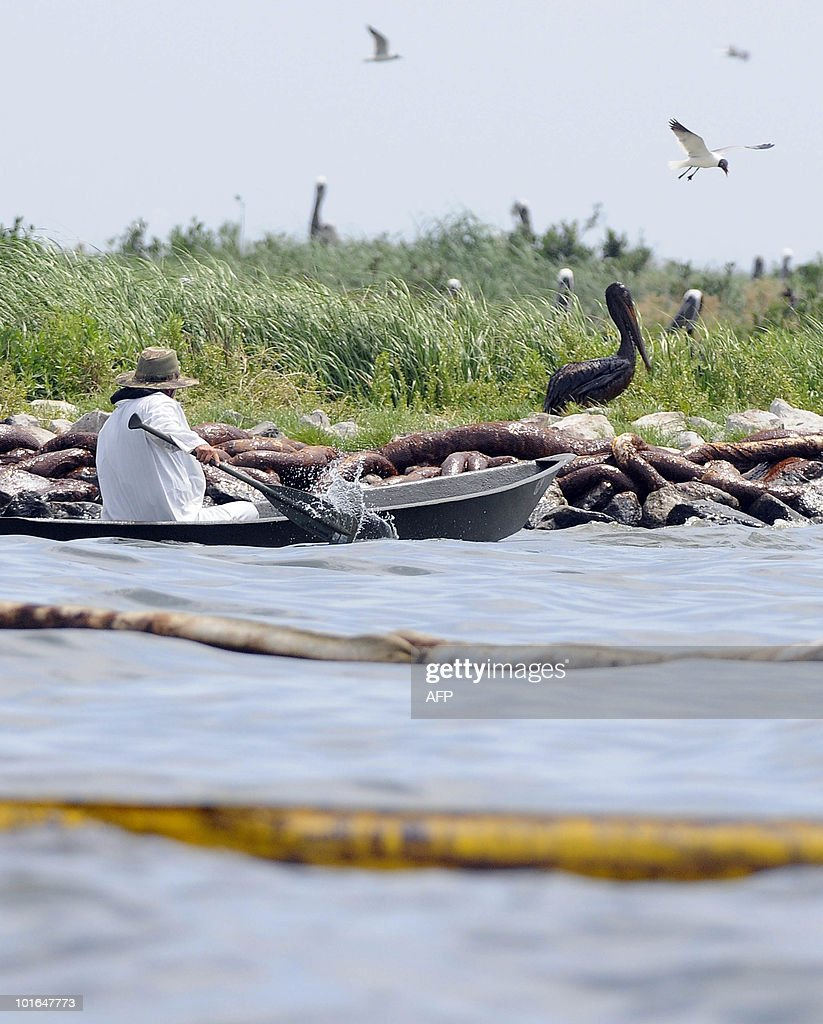 A bird rescuer tries to capture an oil soaked pelican on Queen Bess Island off of Grand Isle, Louisiana, June 5, 2010. The US government will respond to complaints that not enough people are tasked with rescuing creatures soaked in oil from the Gulf of Mexico spill, a top US official pledged June 4. AFP PHOTO/Cheryl GERBER