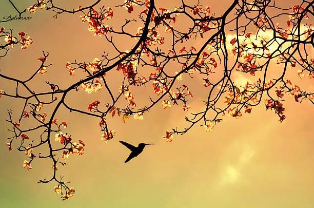 Bird Singing In The Morning Sky Wall Art