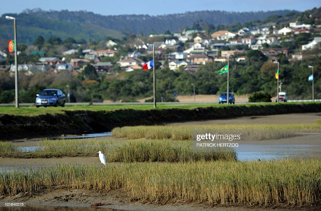 A bird sits in the lagoon of Knysna, in southern South Africa, as various flags of World Cup football teams fly along a road on June 5, 2010. Knysna will host the teams of France and Denmark during the 2010 World Cup football tournament, which will start on June 11.