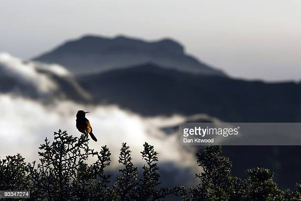 A bird sits on a bush in the Table Mountain National Park ahead of the 2010 FIFA world Cup on October 20 2009 in Cape Town South Africa