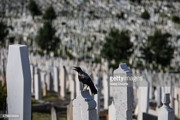 Bird sits on a grave at the city cemetery on July 8, 2015 in Sarajevo, Bosnia and Herzegovina. The newly-identified remains of another 136 victims...