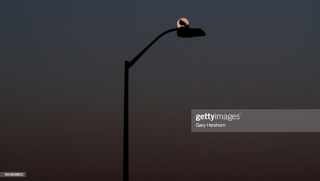 A Bird Sits On A Lamp Post As The Moon Sets At Sunrise On May 1