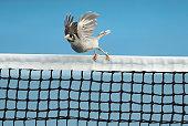 hobart australia bird sits net during