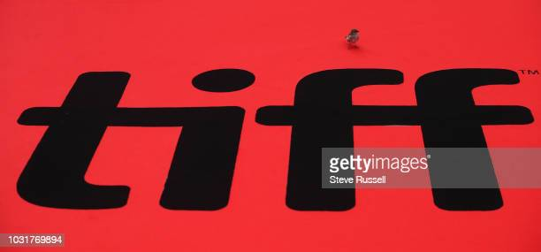 TORONTO ON SEPTEMBER 11 A bird sits on the red carpet of the world premiere of the movie Green Book at the Toronto International Film Festival at Roy...