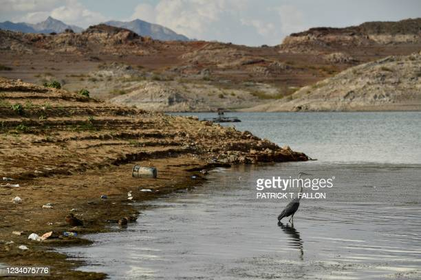 """Bird stands in the water among trash and debris as a """"bathtub ring"""" is visible during low water levels due to the western drought on July 19, 2021 at..."""