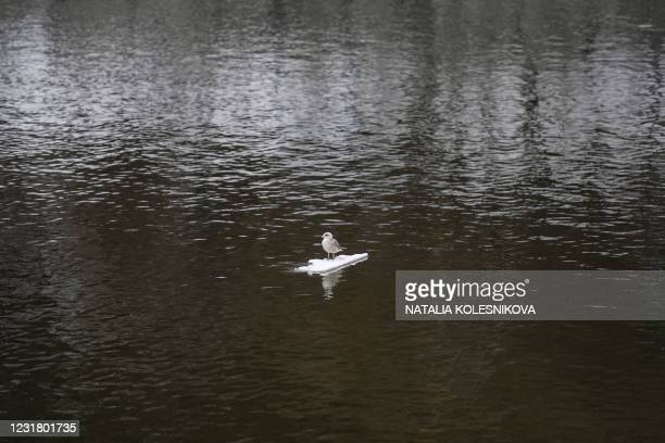 Bird stands on an ice floe floating on the Moskva river in Moscow on March 19, 2021.