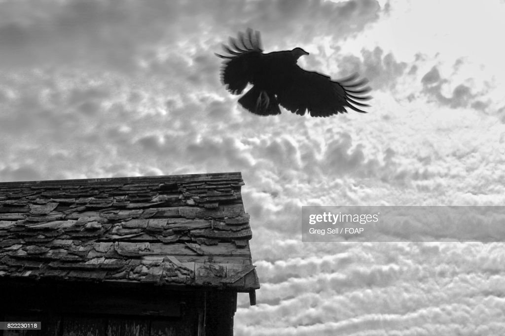 Bird taking off from house roof : Stock Photo