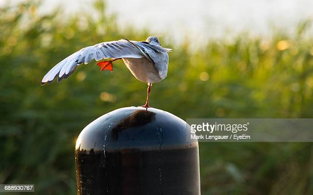 bird urinating on bollard during sunny day - bollard stock photos and pictures