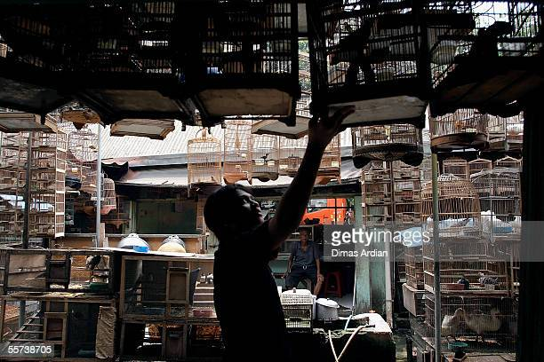 A bird vendor arranges exotic birds at his shop at a bird market September 22 2005 in Jakarta Indonesia Bird flu has killed four and hospitalized 12...