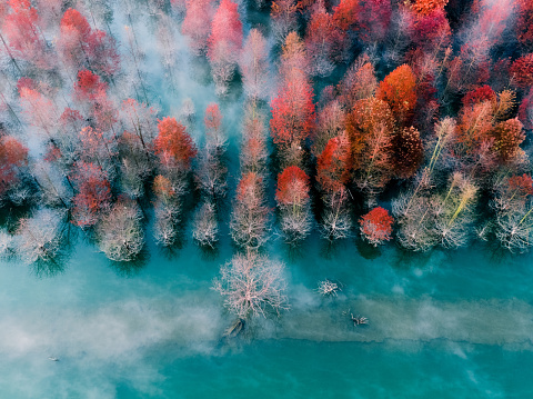 bird view of autumn leaves - gettyimageskorea