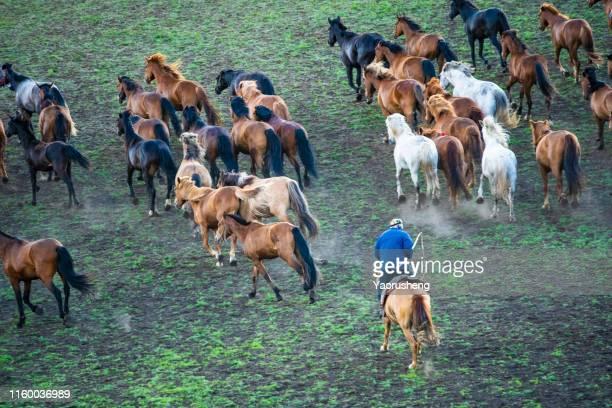 bird view of group of wild horse run on the grassland - mandria foto e immagini stock